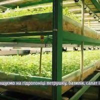 Так тримати: Переселенка з Алчевська створила унікальне еко-підприємство (відео)