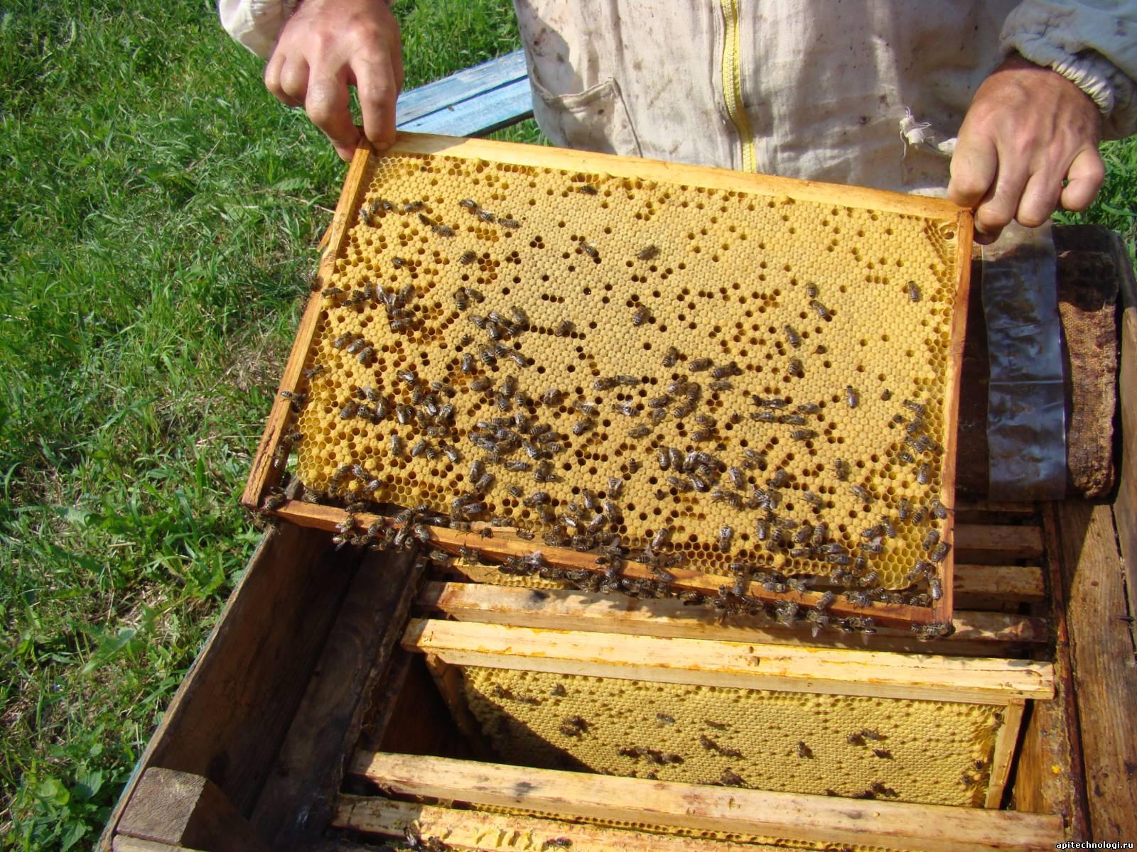 Как делать ульи для пчел своими руками