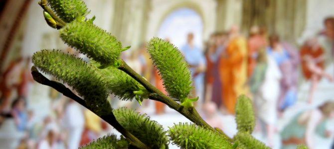 Як зустріти Вербну неділю і провести Страстний тиждень