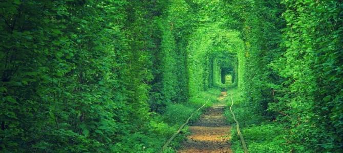 Десять природних чудес України, які треба обов'язково побачити