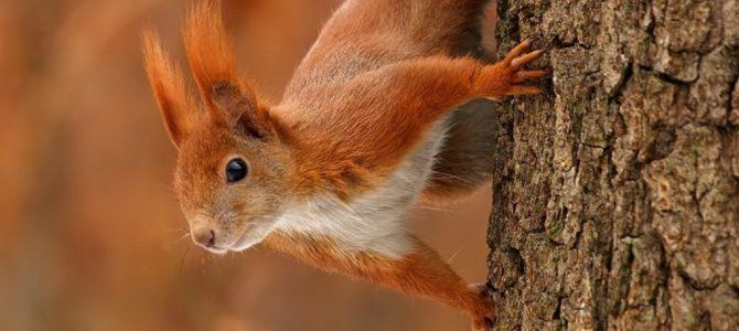 24 жовтня – день Пилипа, коли багото чого розкажуть білки і миші