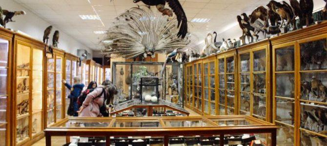 Топ 5 (не)відомих музеїв Львова