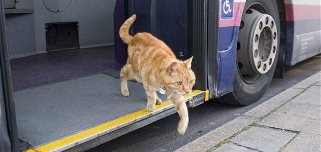 Українець запустив Telegram-кота, який допомагає шукати дешеві автобусні квитки