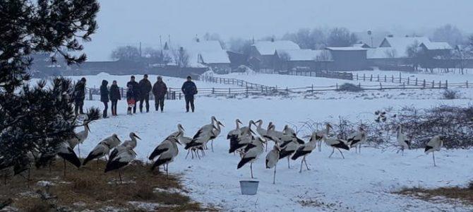 Як на Львівщині небайдужі мешканці рятують змерзлих лелек
