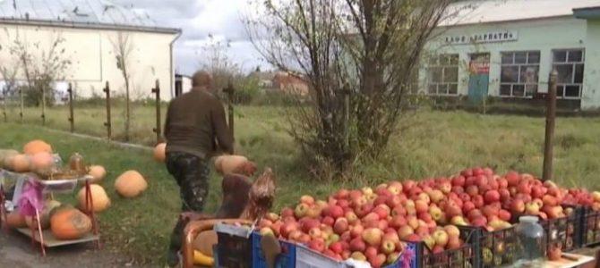 Бізнес на довірі: садівник на Львівщині відкрив придорожні крамниці без продавців