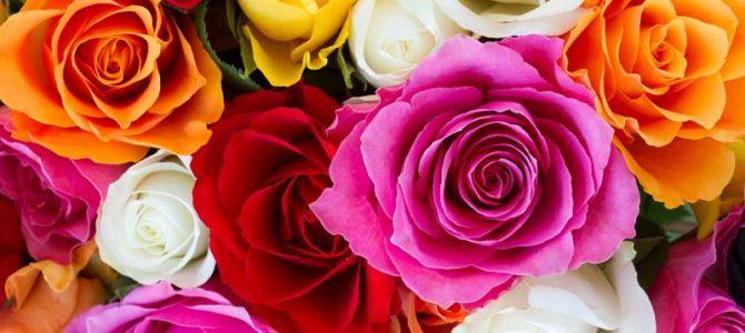 Що означають кольори троянд?