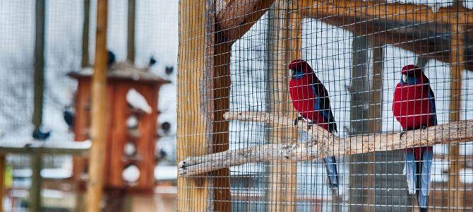 Понад 100 мавп та 40 великих кішок: історія і сьогодення єдиного зоопарку на Львівщині