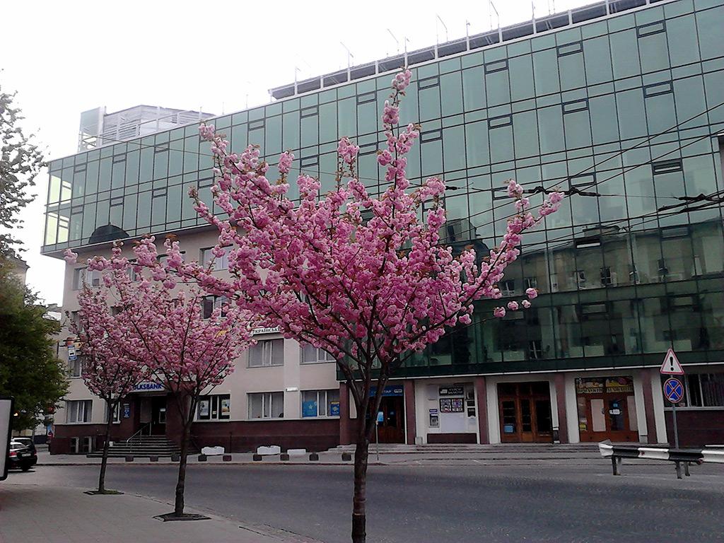 Площа Петрушевича