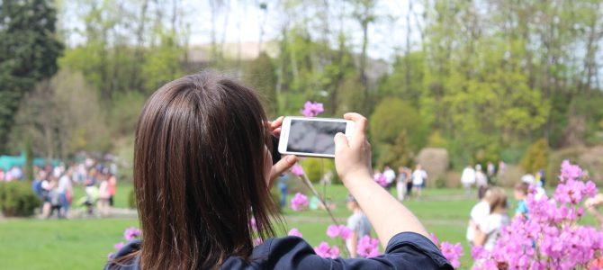 Черемшина цвіте: Ботанічний сад запрошує на День відкритих дверей