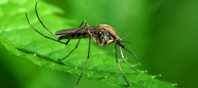 Науковці пояснили, чому на Львівщині цього року так багато комарів