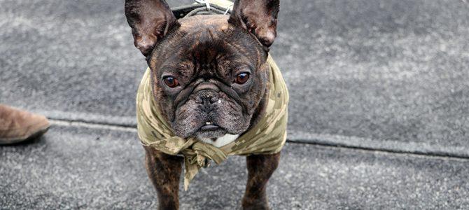 У Львові нагородили собак, які рятували бійців на фронті (фото)