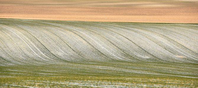 Сила поля: Мінімалістичні пейзажі Галичини від укрїнського фотографа