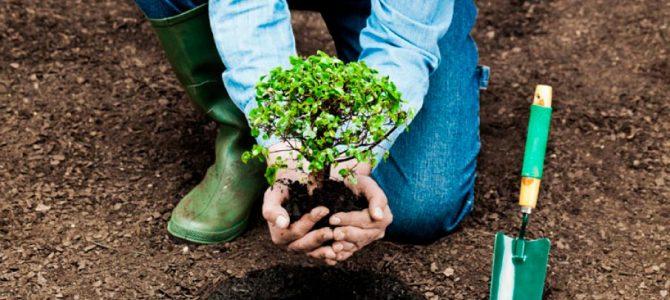 У Києві до Дня вчителя даруватимуть не квіти, а дерева