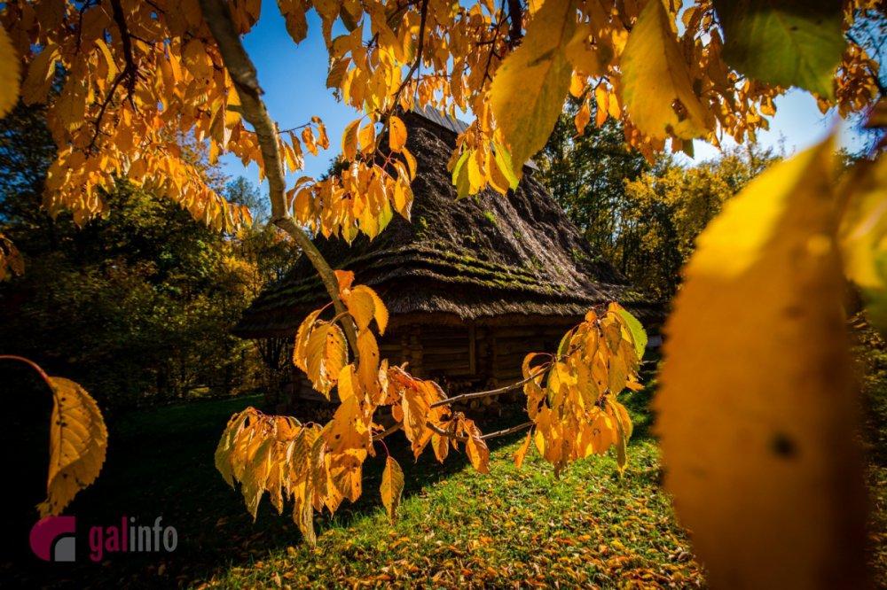 Шевченківський гай восени