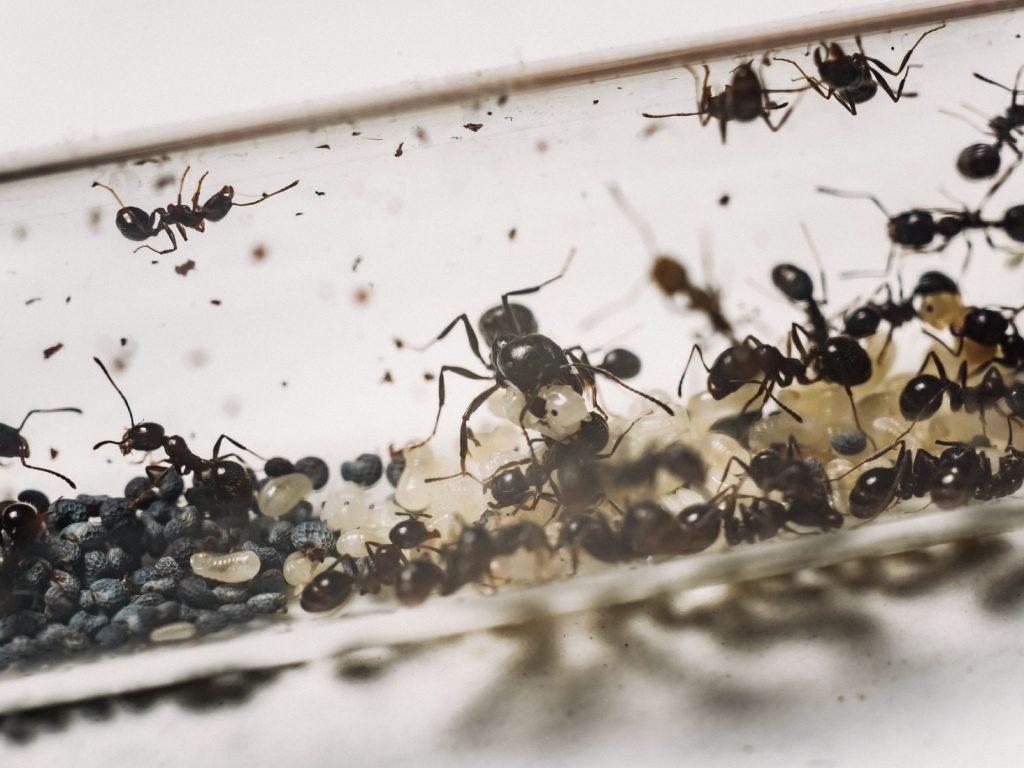 Олександр Іваніцький – ветеран АТО та засновник унікальних мурашиних ферм Ant City