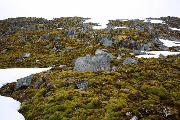 Мохи і трави Антарктиди