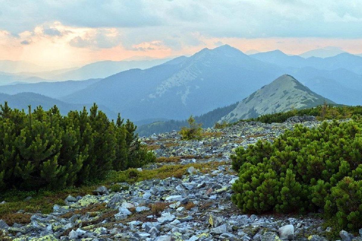 Гори Горгани – куточок дикої природи і заповідник в Українських ...